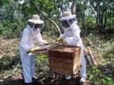 apicultura_160-1