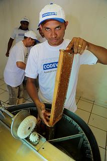 apicultor MA