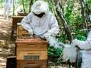 160-apicultura-3-sr