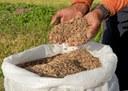 160-rizicultura-em-sergipe