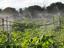 160-irrigacao-nilo-coelho
