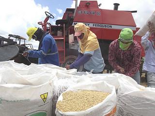 produtores de arroz