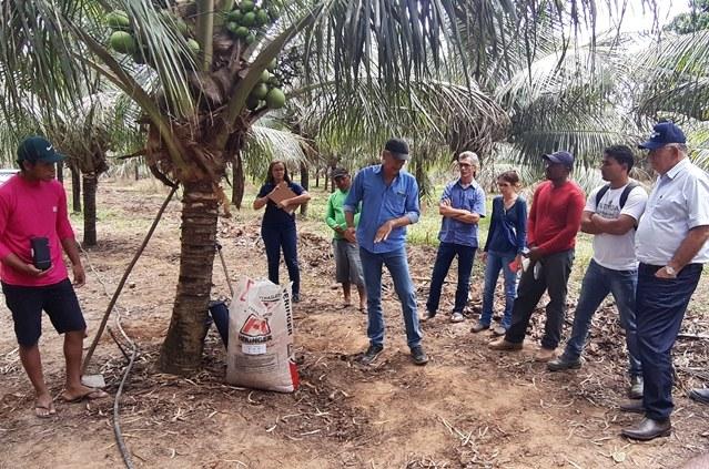 Codevasf e Embrapa promovem oficina sobre cultivo de coco