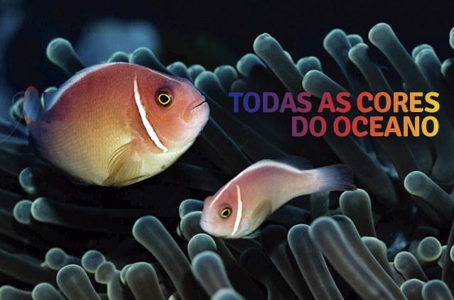 Banner: Todas as cores do oceano. Foto: Juan Murillo. Arte: Fellype Moreira/Codevasf