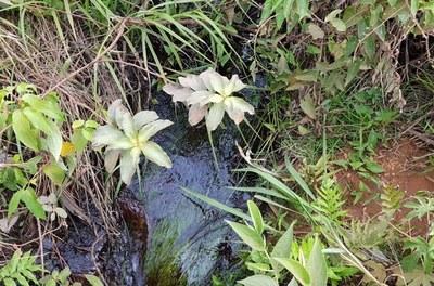Expedição da Codevasf percorre a bacia do Tocantins para elaborar plano de preservação de nascentes