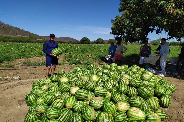 Produção de melancias Ceraíma