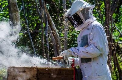 Kits de apicultura