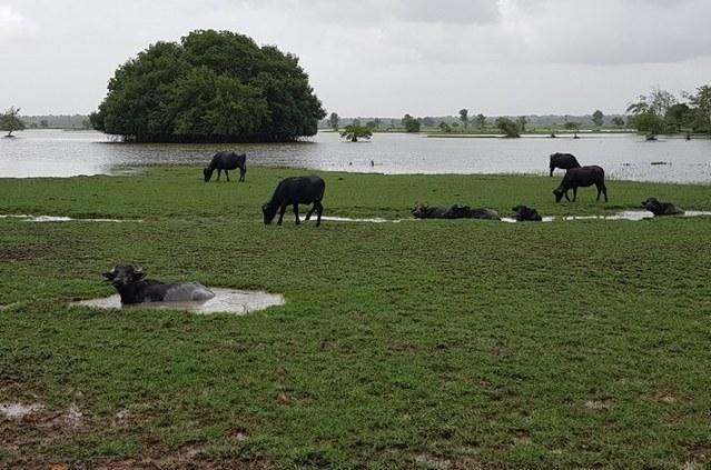 Codevasf percorre bacia do Tocantins para elaborar plano de preservação 2