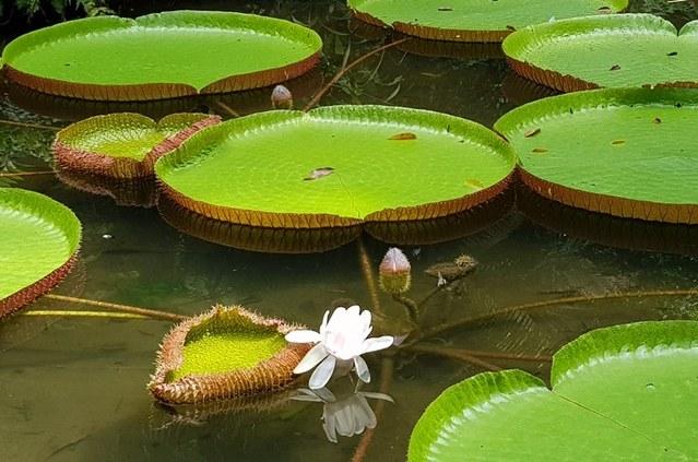 Codevasf percorre bacia do Tocantins para elaborar plano de preservação