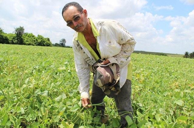 Kit de irrigação Alagoas 2