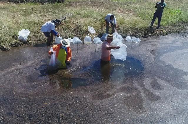 Peixamento Barragem Tanque Novo