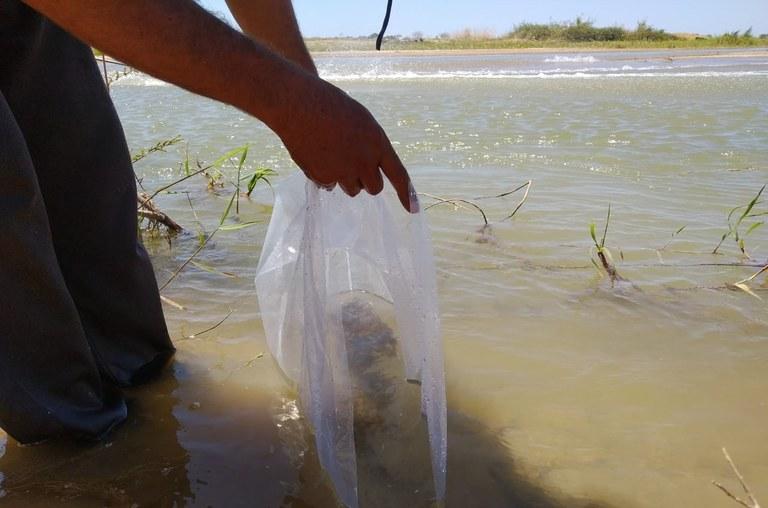 Peixamento em MG