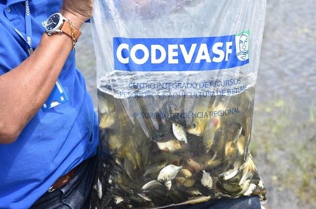 Alevinos - Centro Integrado de Recursos Pesqueiros e Aquicultura de Betume