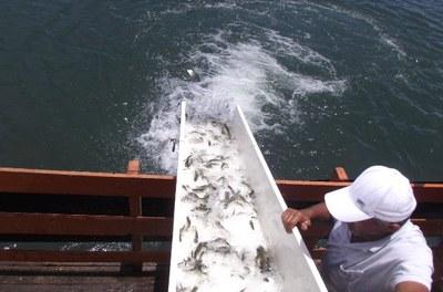 Peixamentos