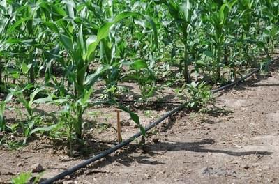 Kits de irrigação em Alagoas