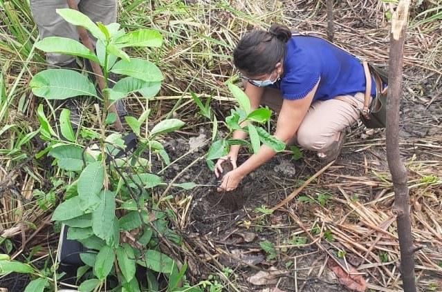 Plantio em São Luis