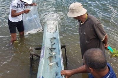 Peixamento Neópolis