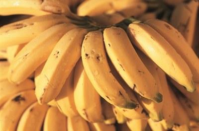 Balanço de irrigação - banana